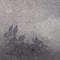 d_rradio - Leaves